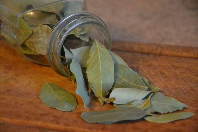 Лікування циститу лавровим листом за один день