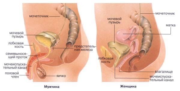 Народні засоби від циститу – методи і рецепти, щоб швидко вилікувати захворювання