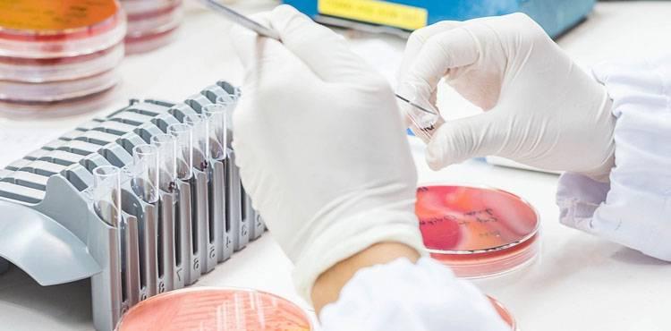П'ять найбільш поширених бактерій які провокують бактеріальний цистит